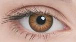 Линзы Adria Glamorous Color 2 шт brown